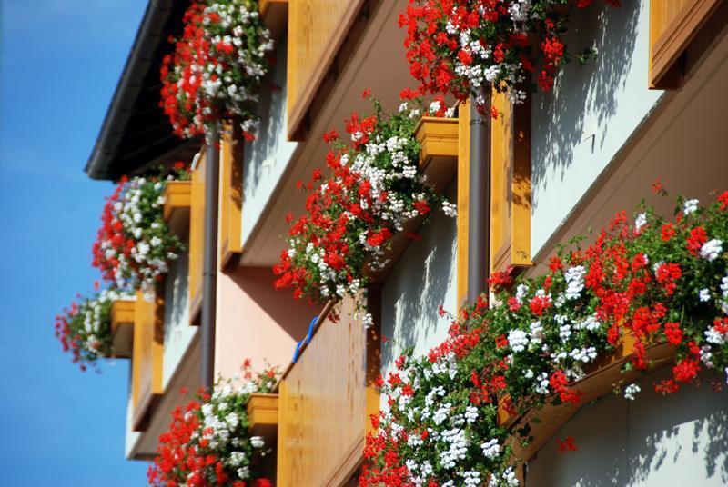 Residence Antares Andalo vista Dolomiti