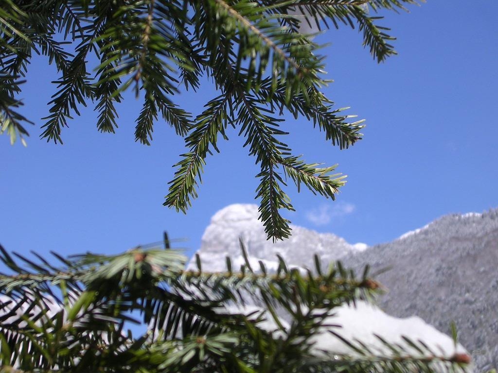 Residence Alpenrose_immagine esterno 4
