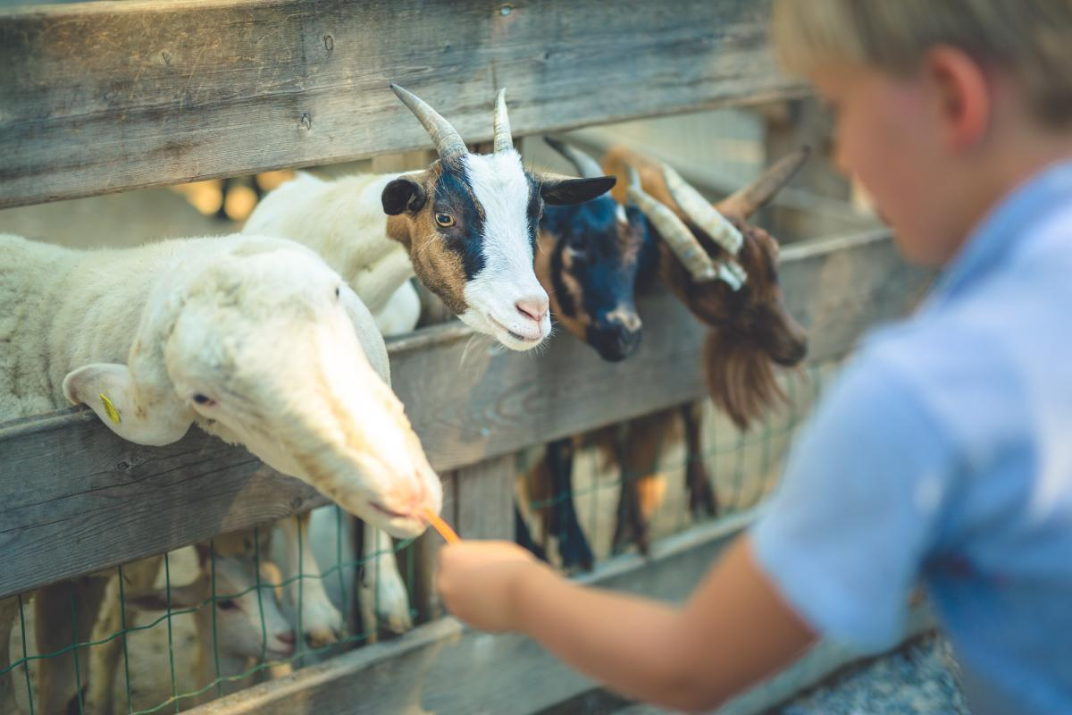 Dolomiti Paganella | Fattorie didattiche in Trentino per la vacanza con bambini sulle Dolomiti