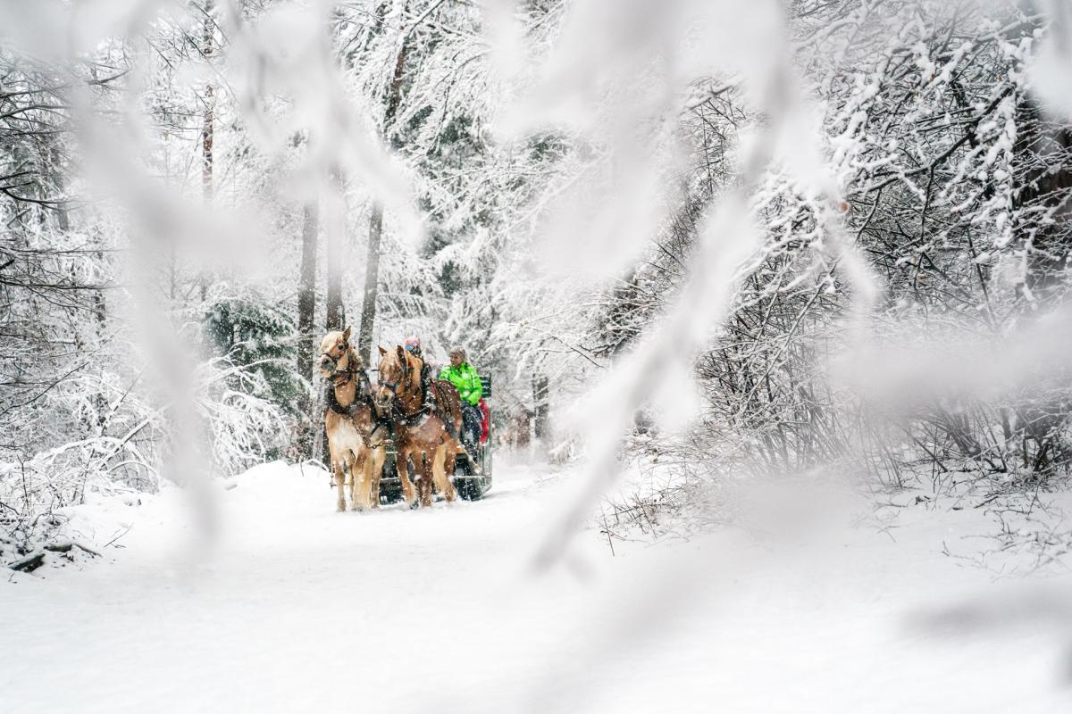 Family carrozza cavalli_inverno 2020.ph. Oliver Astrologo (1)