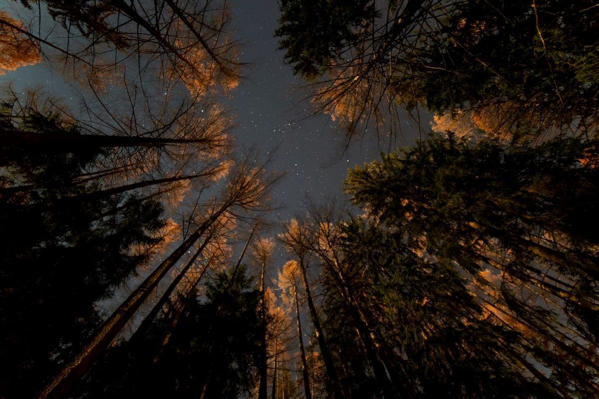 Il Bosco di notte