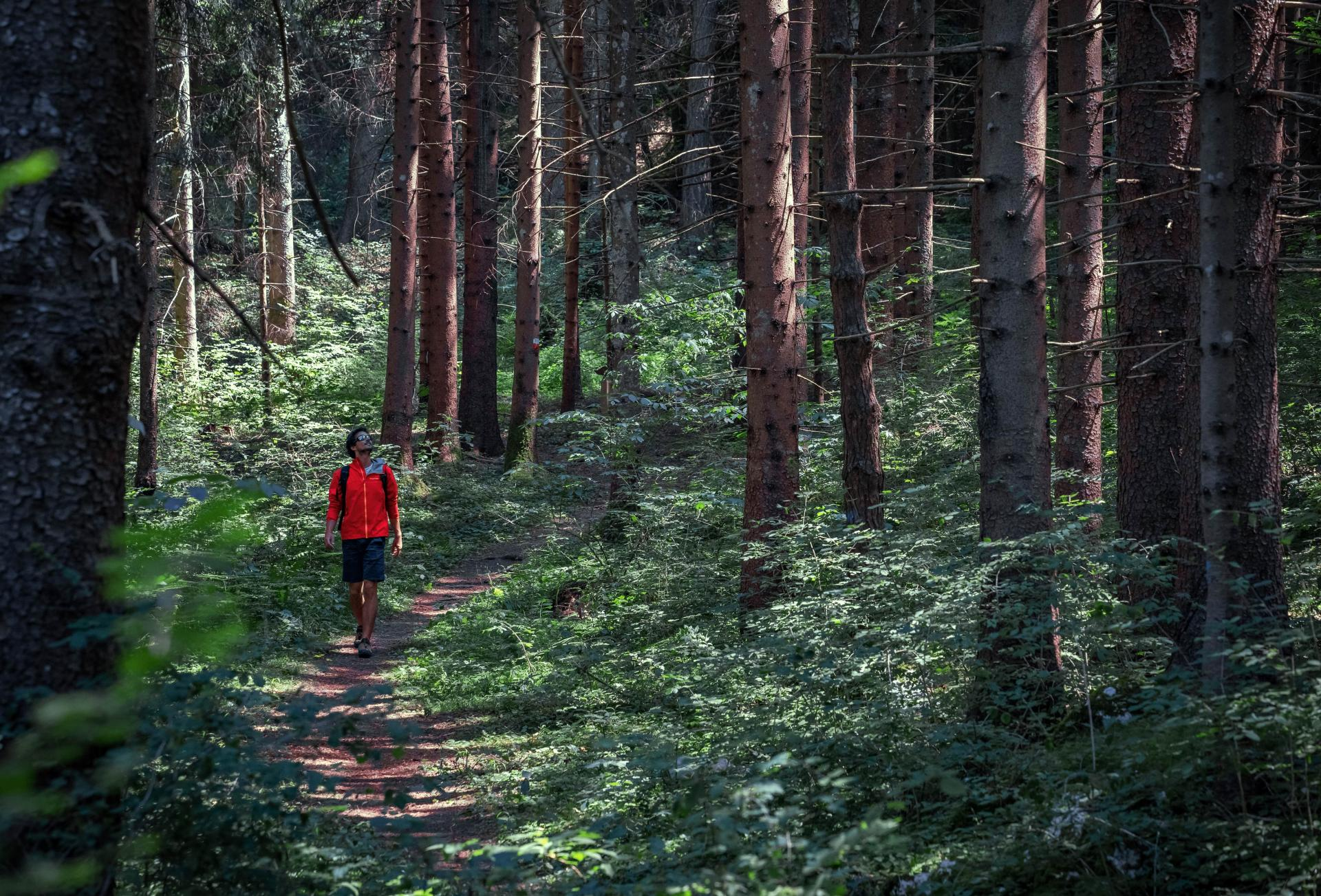 Il Parco del Respiro: Forest bathing in Paganella