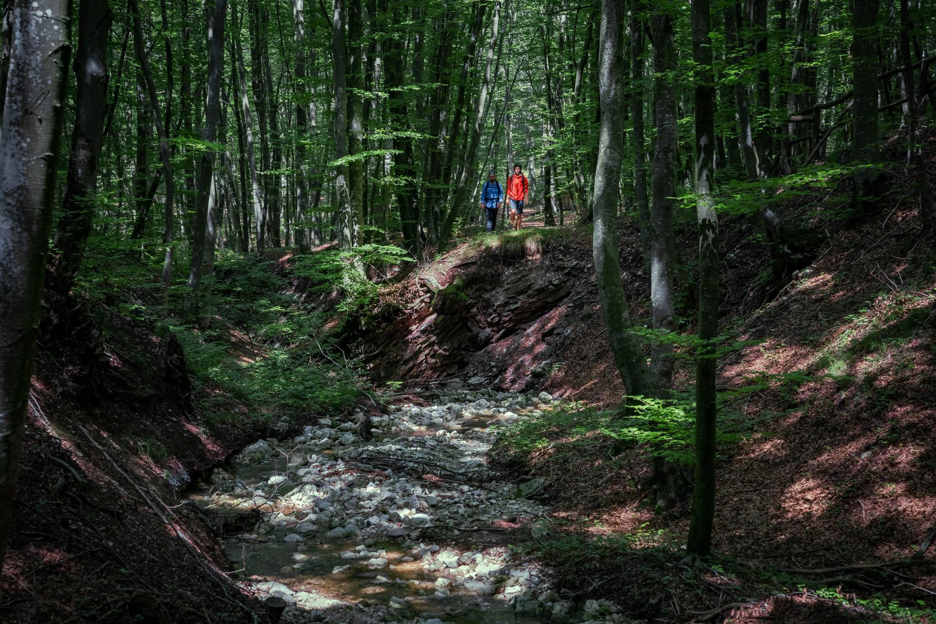 Forest bathing in Paganella