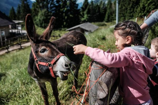 Discover More Family holiday Trentino: Dolomites for children