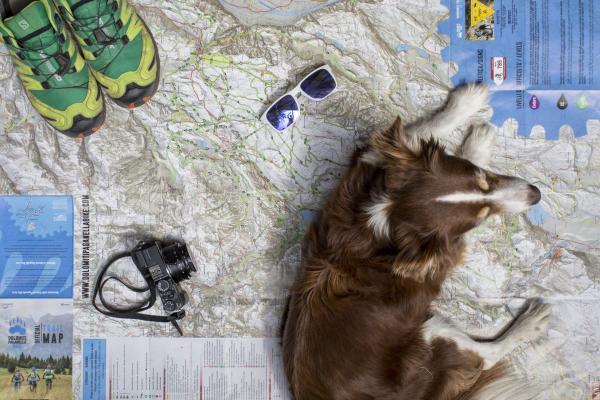 Mit dem Hund in Dolomiti Pagenella? Aber sicher!