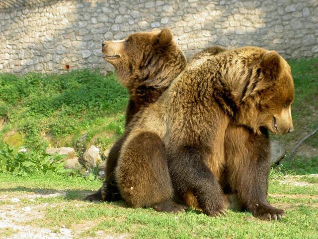 Sulle tracce dell'orso