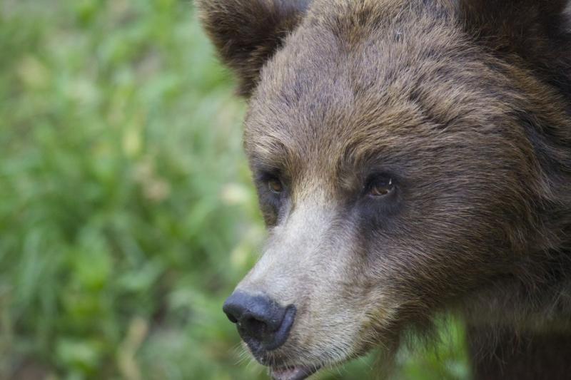 Alla scoperta di orso, lupo e lince